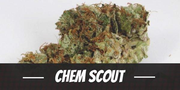 Chem Scout