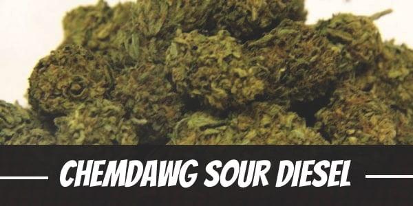 Chemdawg Sour Diesel