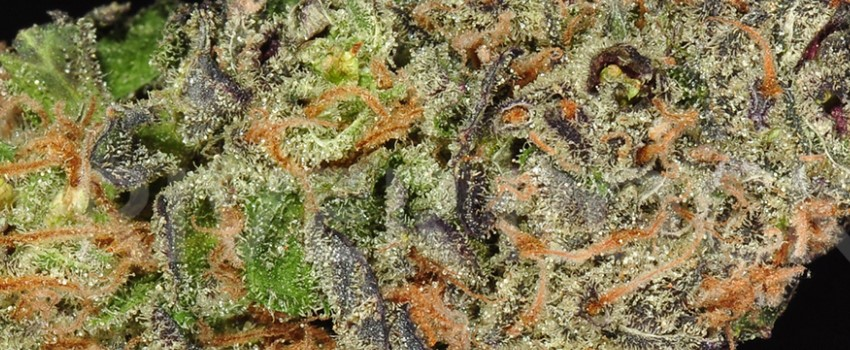 Chemdawg Sour Diesel Adverse Reaction