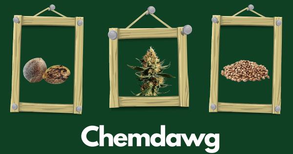 Chemdawg Marijuana Strain