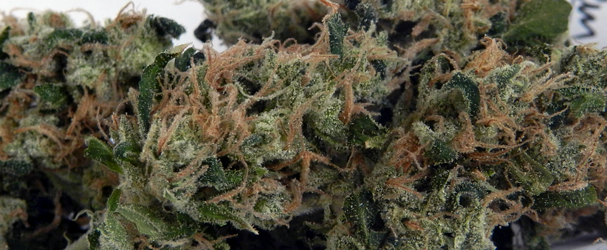 Chemdawg_#4_Effects