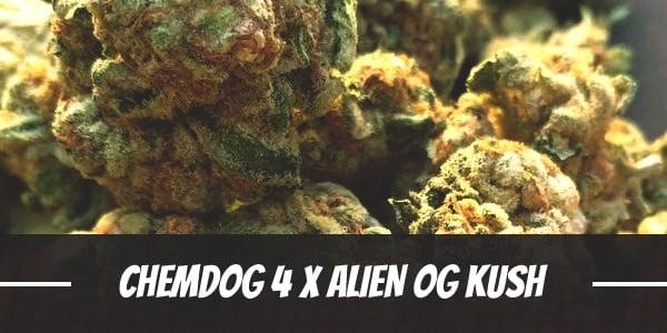 Chemdog # 4 X Alien OG Kush