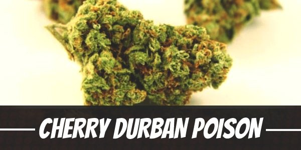 Cherry Durban Poison