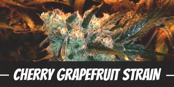 Cherry Grapefruit Strain