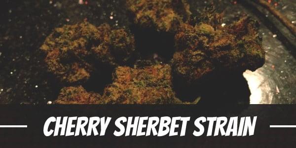 Cherry Sherbet Strain