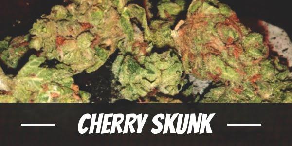 Cherry Skunk