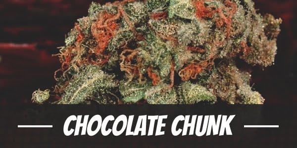 Chocolate Chunk