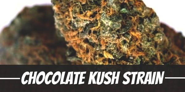 Chocolate Kush Strain