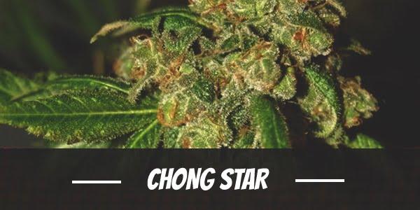 Chong Star