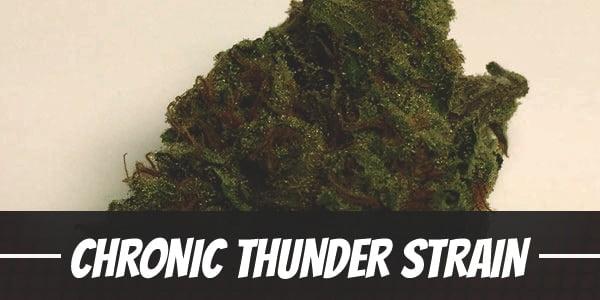 Chronic Thunder Strain
