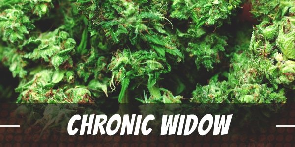 Chronic Widow Strain