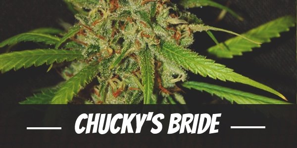 Chucky's Bride