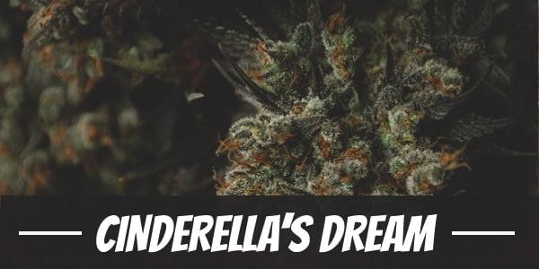 Cinderella's Dream