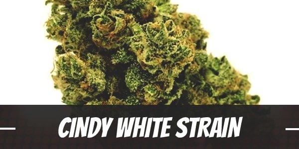 Cindy White Strain