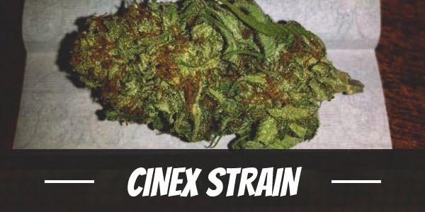 Cinex Strain