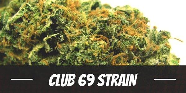 Club 69 Strain