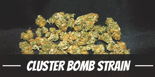 Cluster Bomb Strain