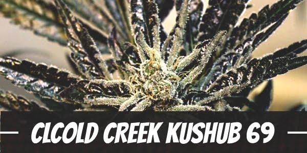 Cold Creek Kush