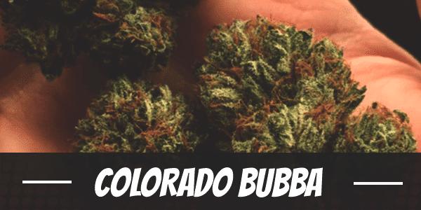 Colorado Bubba