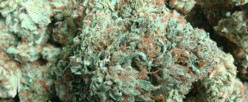 Colorado Bubba Effects
