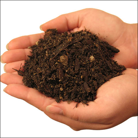 Composition Of The Soil