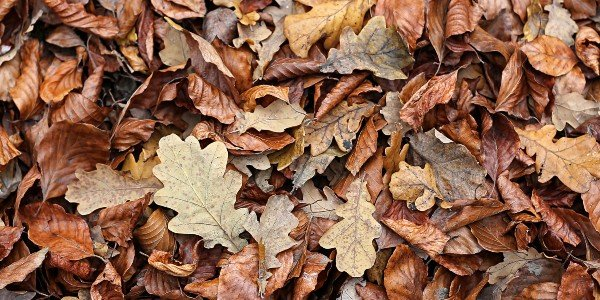 Compost pile with brown leaves