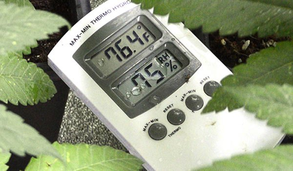 Conditions in Your Grow Room