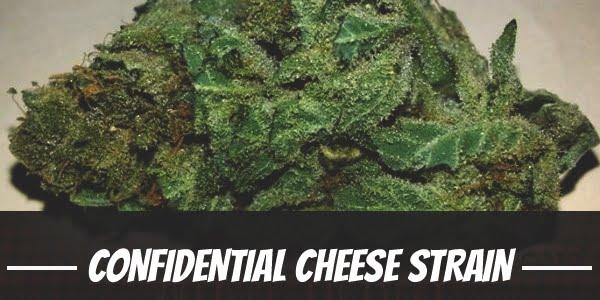 Confidential Cheese Strain