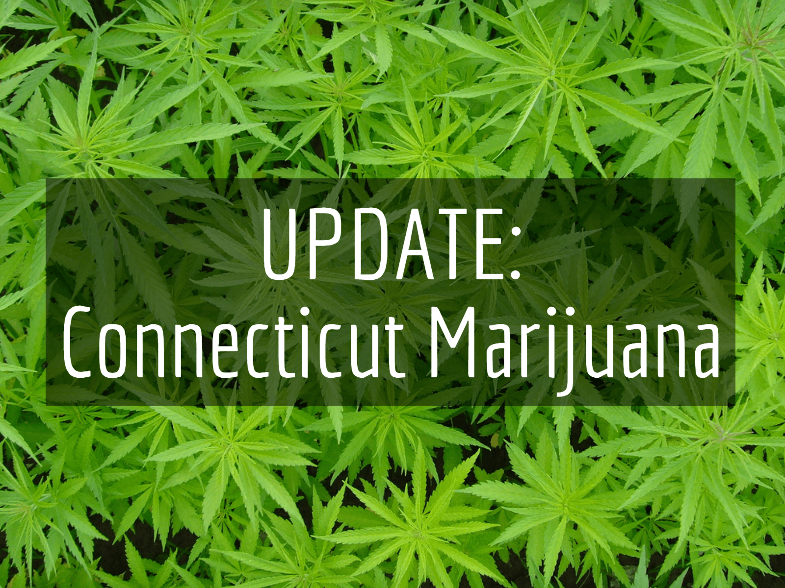 How to start a commercial grow operation in Connecticut