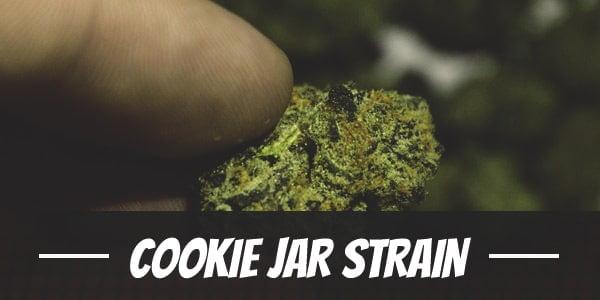 Cookie Jar Strain