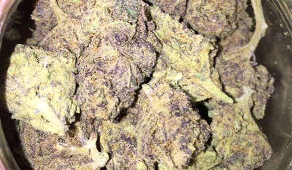 Cookie Jar Strain Medical
