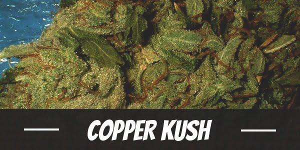 Copper Kush