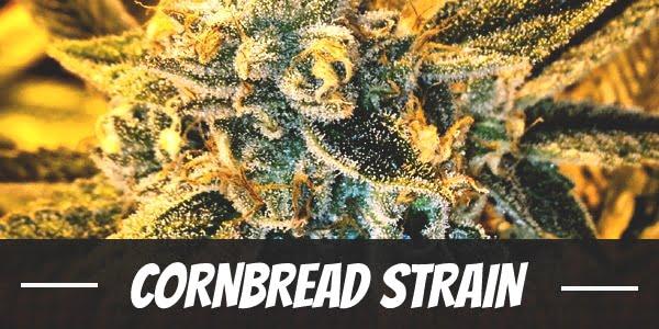 Cornbread Strain