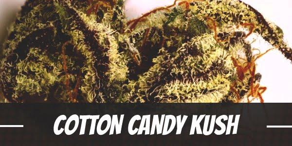 Cotton Candy Kush