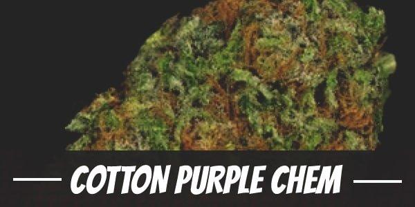 Cotton Purple Chem