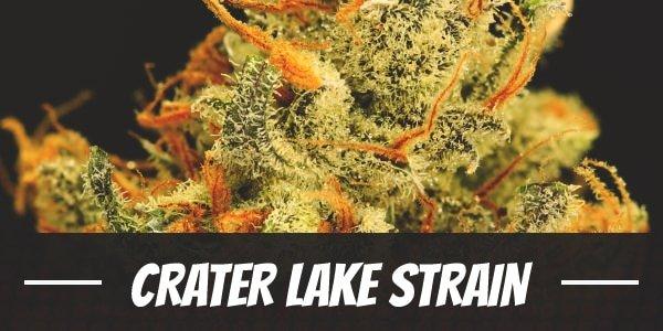 Crater Lake Strain