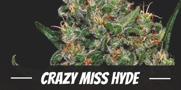 Crazy Miss Hyde
