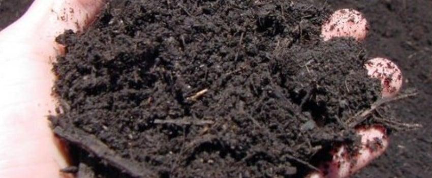 Creating a Super Soil