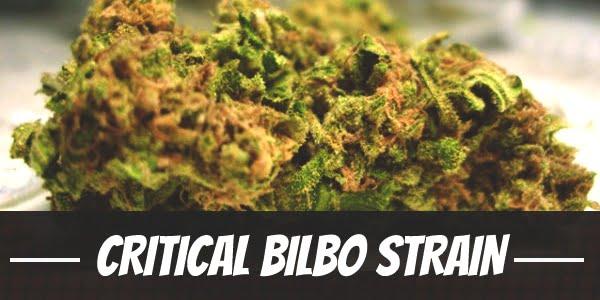 Critical Bilbo Strain