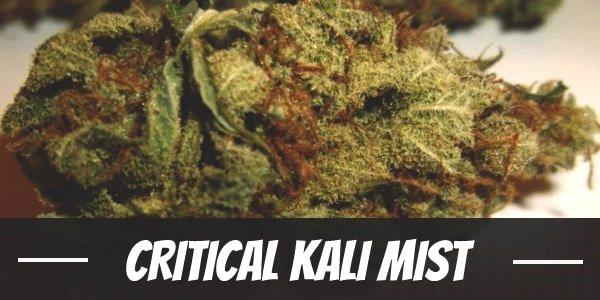 Critical Kali Mist