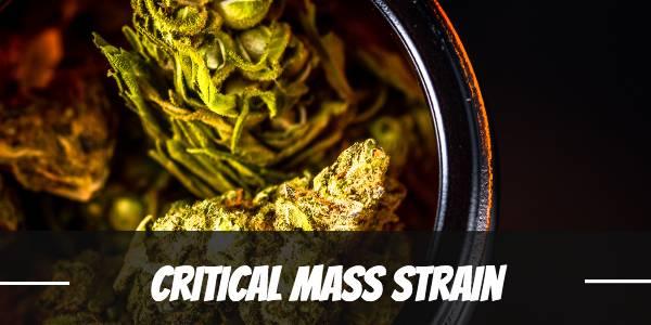 Critical Mass Strain