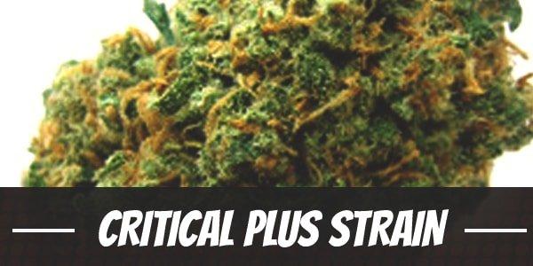 Critical Plus Strain