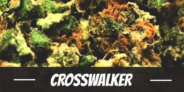 Crosswalker