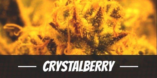 Crystalberry