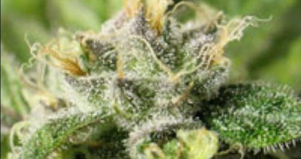 Crytalberry Medical
