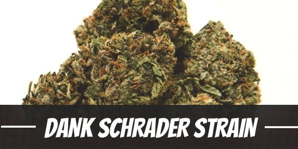 Dank Schrader Strain