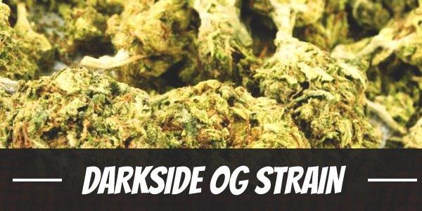 Darkside OG Strain