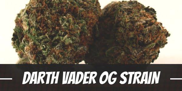 Darth Vader OG Strain