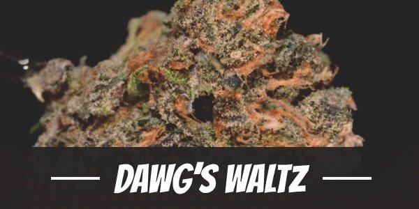 Dawg's Waltz