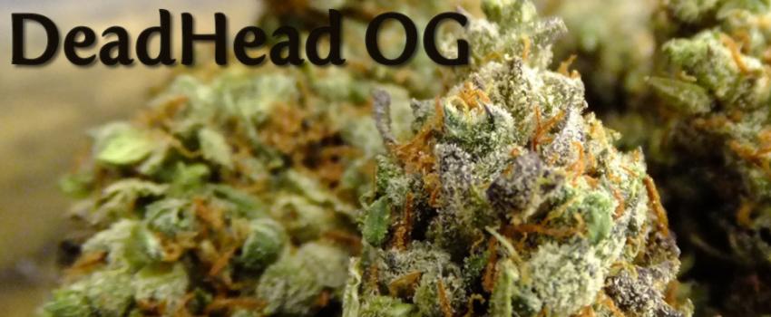 DeadHead_OG